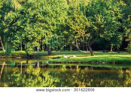 Pond In The Morning Park. Beautiful Scenery In Sunlight. Ducks On The Shore. Reflection In The Water