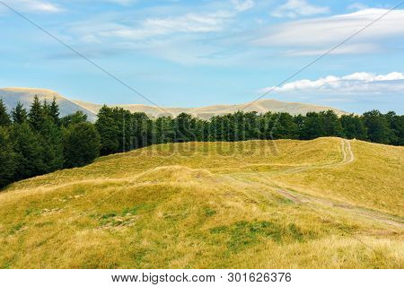 Carpathian Sub Alpine Meadows In August. Beautiful Mountain Landscape. Road Winding In To The Distan