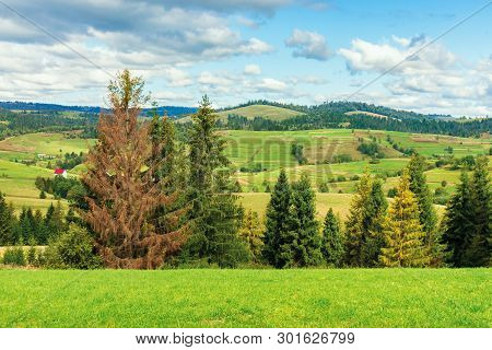 Rural Area In Carpathian Mountains. Cloudy September Weather. Row Of Threes Behid The Green Grassy M