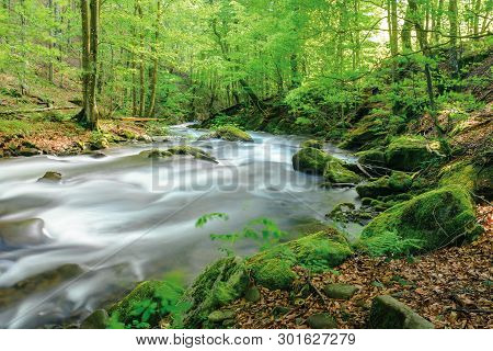 River In The Ancient Beech Forest. Stones Covered In Moss. Smooth Water Flow, Long Exposure. Beautif