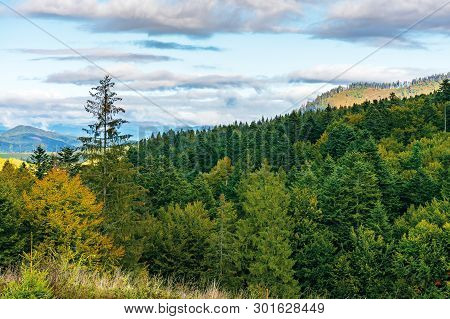Cloudy September Countryside In Mountains. Beautiful Nature Background. Mixed Forest In Dappled Ligh