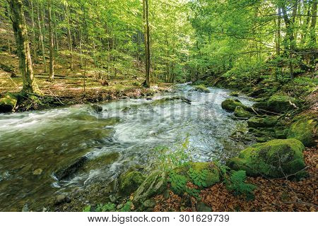 Wild Rapid River In The Ancient Beech Forest. Stones Covered In Moss On The Shore Of A Powerful Wate