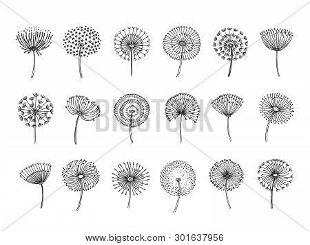 Dandelion Set. Doodle Hand Drawn Dandelions Monstera Delicate Plant Seeds Summer Botanical Fluff Flo