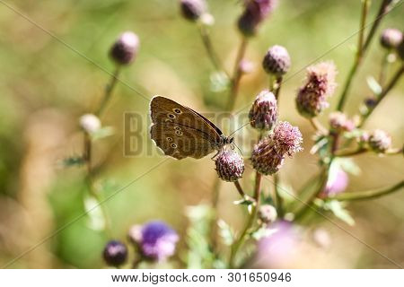 Nature Background Butterfly. Butterfly Insect In Nature. Nature Insect Butterfly On A Flower Plant.