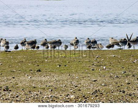 Sandpiper Ding Darling Wildlife Refuge Sanibel Florida