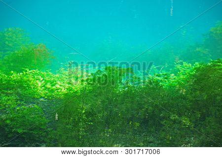 Water Plants At Shore Of Blautopf, Karstic Spring Of River Blau In Blaubeuren, Germany