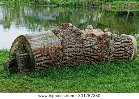 A Large Gray Dry Poplar Log Lies In The Green Grass On The Shore Of A Lake Near The Water