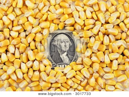 Cash Corn Crop V