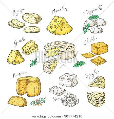 Hand Drawn Cheese. Doodle Appetizers And Food Slices, Different Cheese Types Parmesan, Brie Cheddar