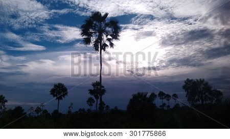 Late Afternoon In Field With Silhouette Of Vegetation