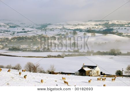 Small Farm Land in Snow Covered Rolling Hills poster