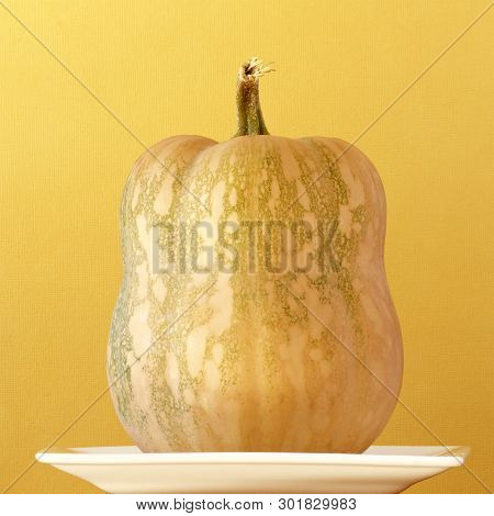 Butternut Pumpkin On A White Dish And A Yellow Background.