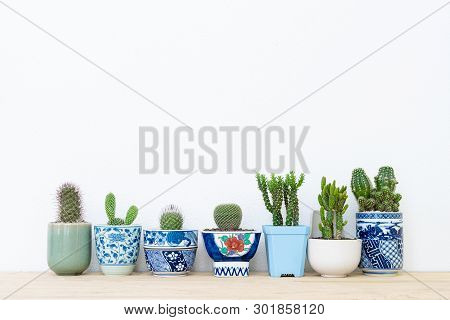 Collection Of Various Cactus Plants In Different Pots.