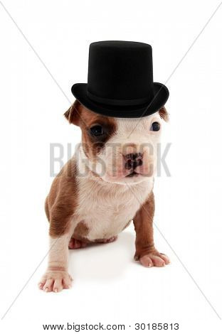 Rich puppy with monocle and top hat