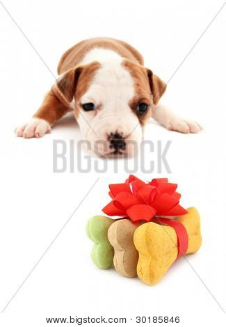 Little dog puppy is lurking dog biscuits bones gift with red bow