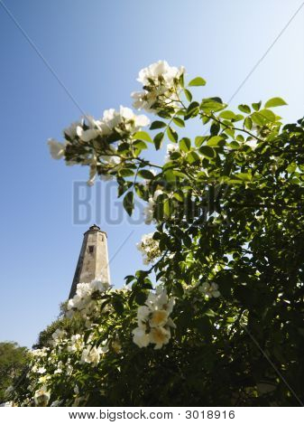 Lighthouse And Flowers.