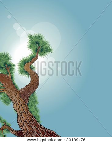 Detailed pine tree vector illustration.