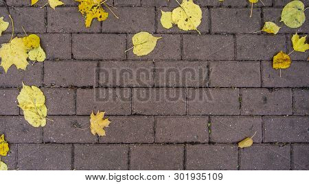 Autumn Yellow Leaves On Paving Slabs. Stock Horizontal Photo For Banner, Background.