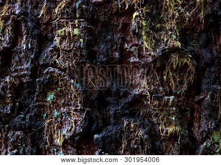 Aged Worn Tree Bark Close Up With Small Moss Particles Growing