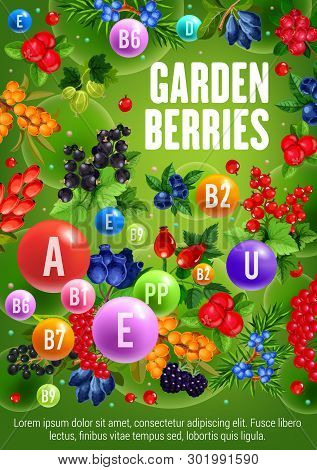 Farm Garden Berries Black Currant Or Redcurrant And Rose Hip Fruits. Vector Vitamins And Minerals In