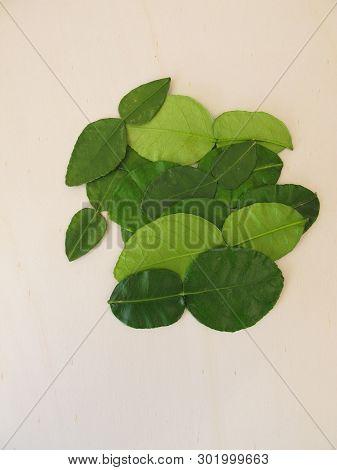 Fresh Kaffir Lime Leaves On Wooden Board