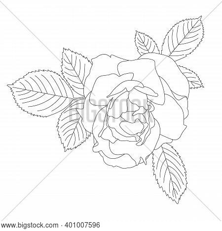 Rose With Three Leaves Drawn With A Outline. Monochrome Vector Graphics. Black And White Drawing Of