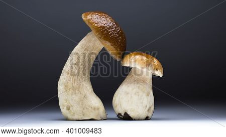 Beautiful Cep Mushroom (penny Bun, Porcini, Boletus Edulis) With Its Child - Another Small Mushroom.