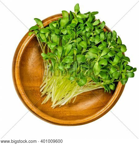 Fenugreek Microgreens In A Wooden Bowl. Ready To Eat Green Sprouts And Shoots Of Trigonella Foenum-g