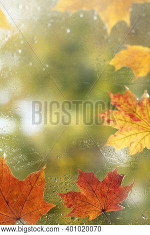 Maple Leaves On The Window After The Rain. Place For Autumn Inscriptions