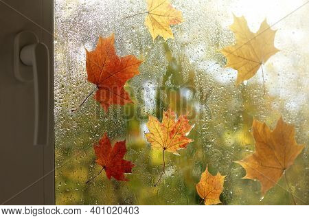 Maple Leaves On Wet Glass After Rain. View From The Autumn Window