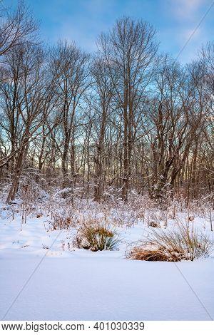 Fresh Snow In Freneau Woods Park At Dusk In Aberedeen Nj.