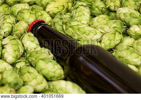 Beer Bottle Lies On Hop Cones, Close Up. A Glass Bottles Of Beer, Green Cones.
