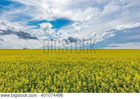 A Wide Open, Blue Prairie Sky Over A Canola Field In Bloom In Saskatchewan, Canada
