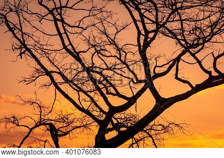 Silhouette Leafless Tree And Sunset Sky. Dead Tree On Golden Sunset Sky Background. Peaceful And Tra