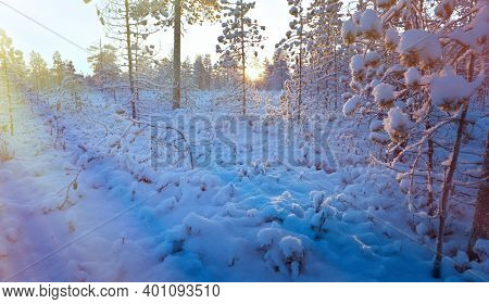 Winter Snowy Forest At Sunset.