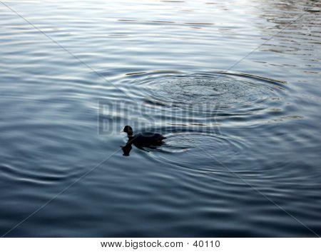 Ilford Lake