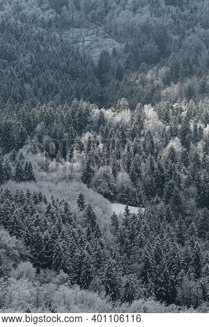 Aerial View Of Dense Mixed Forest In Winter, Snow Covered Trees. Nature, Forestry And Environment Co
