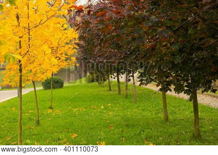 Autumn View Of The Park Alley Trees. Autumn Landscape Of The Park Alley. Autumn Park Alley. Selectiv