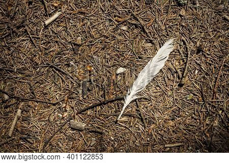 White Feather On A Pine Forest Ground. Detailed Close Up View On A Forest Ground Texture.