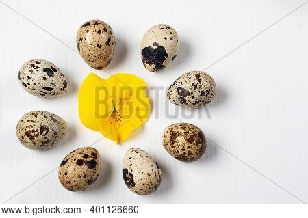 Composition Of Quail Eggs With A Yellow Flower In The Center. Yellow Violet On An Egg Background.qua