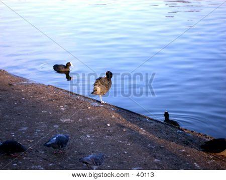 Ilford Lake 4