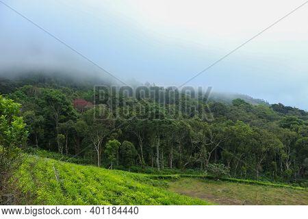Munnar Garden And Tea Plantation . Tea Plantations In Munnar, Kerala, India. Stock Images