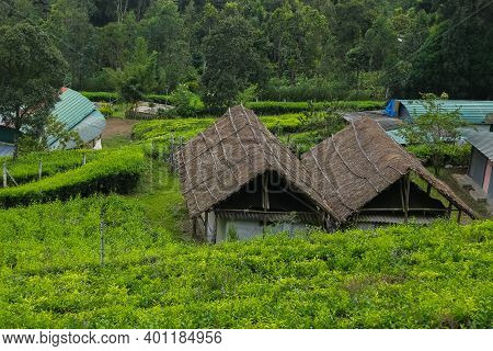 Beautiful Home Stay Villa Located On Center Of Tea Plantation In Munnar, Kerala, India. Home Stay To