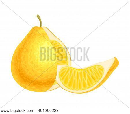 Citrus Fruit With Cutout Juicy Segment Vector Illustration