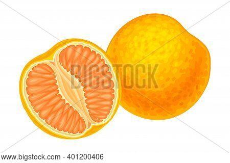 Citrus Fruit With Half Showing Juicy Segment Vector Illustration