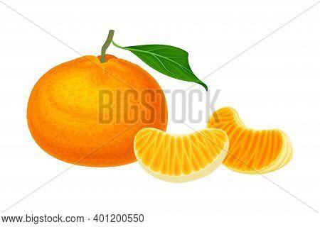 Mandarin Or Tangerine With Juicy Segments Vector Illustration