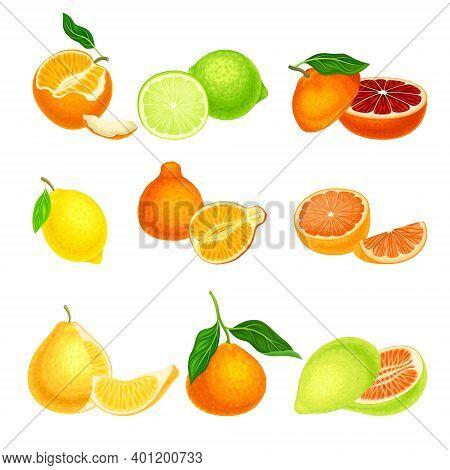 Citrus Hesperidium Fruits With Orange And Grapefruit Vector Set