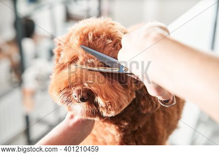 Groomers Holding Tools At The Hands Near Muzzle