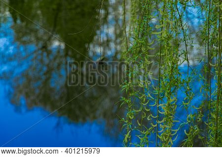Soft Focus Ecology Natural Photography Concept Of Green Branches Foliage Above Vivid Blue Pong Water