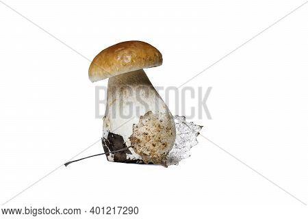 Beautiful Thick Mushroom - Cep (porcini, Penny Bun, Boletus Edulis) With An Tracery Golden Autumn Le